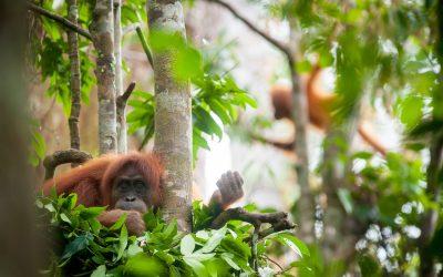 Help SOS een nieuw natuurgebied een naam geven