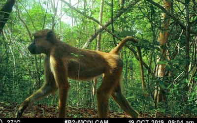 Wilde dieren vangen… Op camerabeelden
