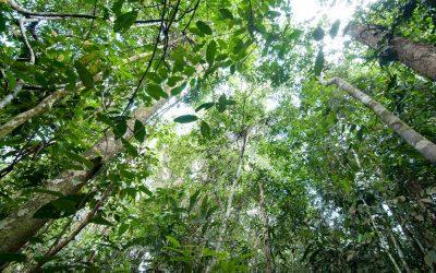 Wettelijke maatregelen tegen illegale plantages