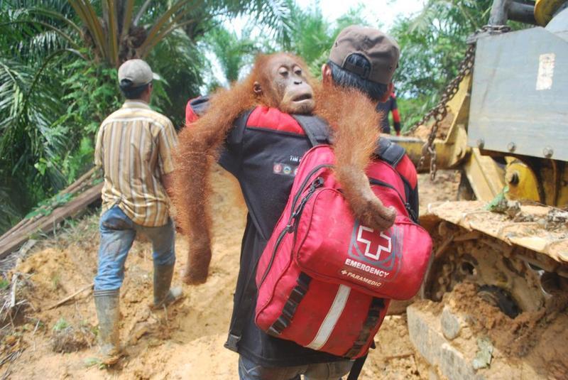 Help het orang-oetan reddingsteam