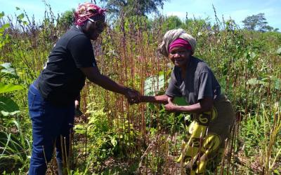 75-Jarige vrouw inspireert tot het kweken van teak