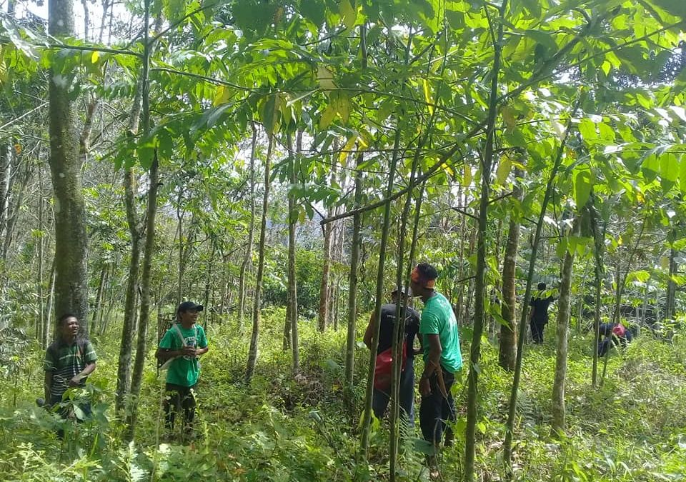 Herstel van het bos in Gunung Leuser